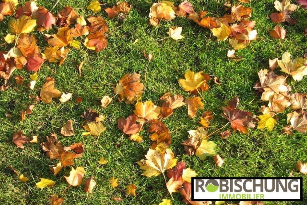 herbe automne